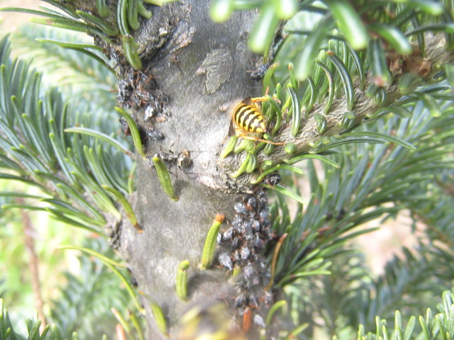 Bugs In Christmas Trees.Your Christmas Tree Could Be Infested With Thousands Of Bugs