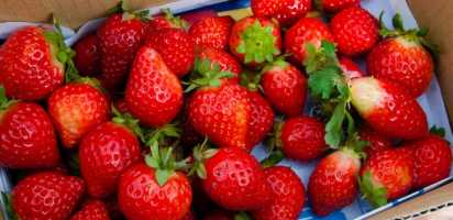 Strawberries ranked #1 for most pesticides